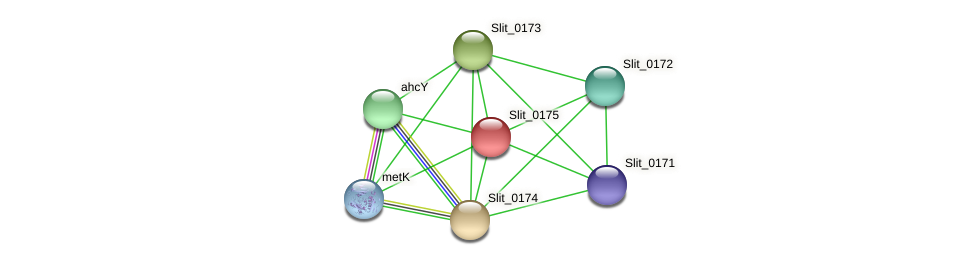 Slit_0175 protein (Sideroxydans lithotrophicus) - STRING interaction network
