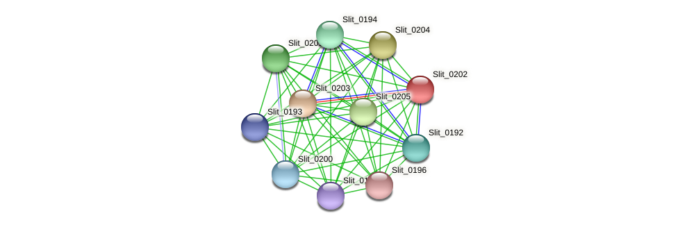 Slit_0202 protein (Sideroxydans lithotrophicus) - STRING interaction network