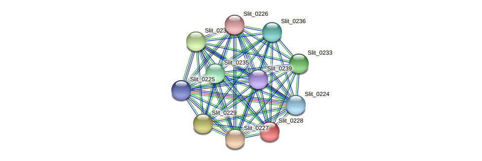 Slit_0228 protein (Sideroxydans lithotrophicus) - STRING interaction network