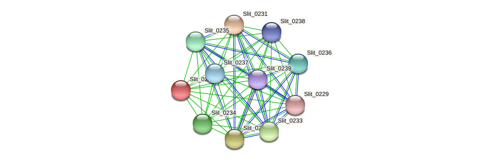 Slit_0230 protein (Sideroxydans lithotrophicus) - STRING interaction network