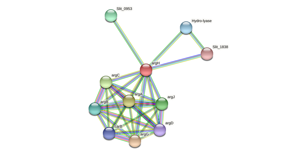 argH protein (Sideroxydans lithotrophicus) - STRING interaction network