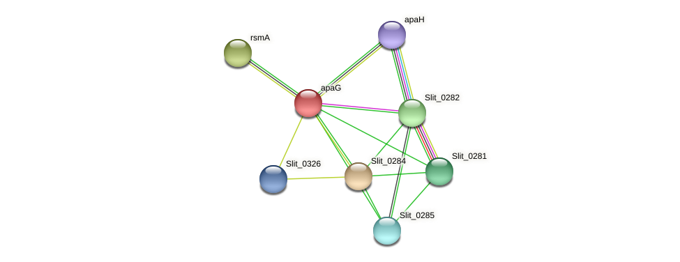 apaG protein (Sideroxydans lithotrophicus) - STRING interaction network