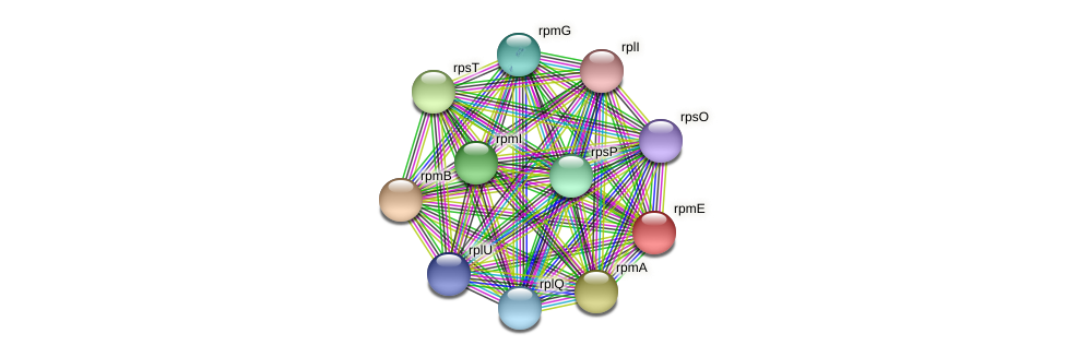 rpmE protein (Sideroxydans lithotrophicus) - STRING interaction network