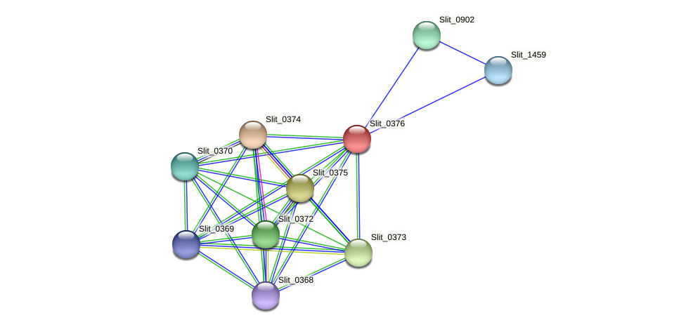 Slit_0376 protein (Sideroxydans lithotrophicus) - STRING interaction network