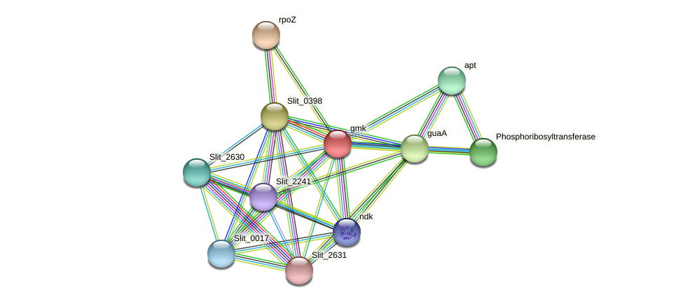 gmk protein (Sideroxydans lithotrophicus) - STRING interaction network