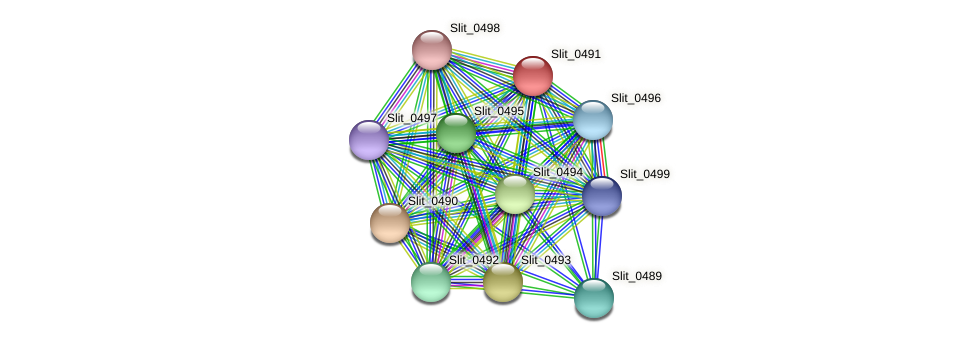 Slit_0491 protein (Sideroxydans lithotrophicus) - STRING interaction network
