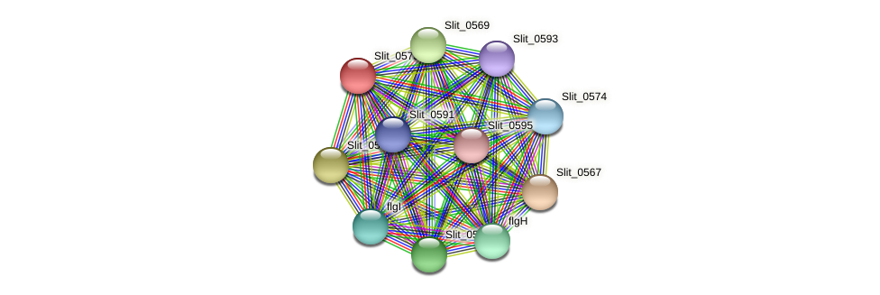 Slit_0573 protein (Sideroxydans lithotrophicus) - STRING interaction network