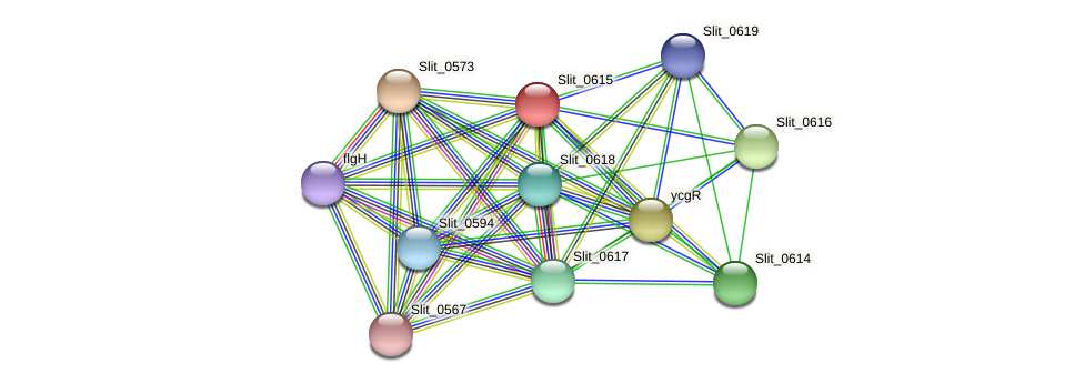 Slit_0615 protein (Sideroxydans lithotrophicus) - STRING interaction network