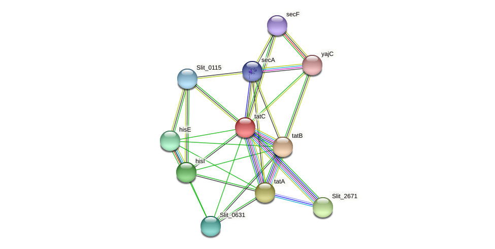 tatC protein (Sideroxydans lithotrophicus) - STRING interaction network