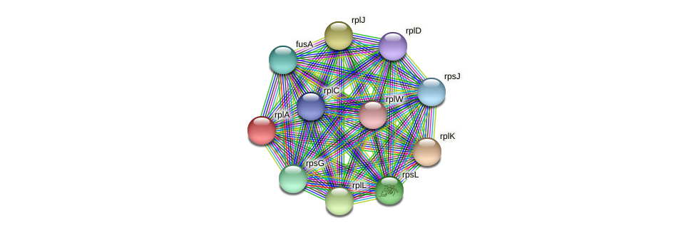 rplA protein (Sideroxydans lithotrophicus) - STRING interaction network