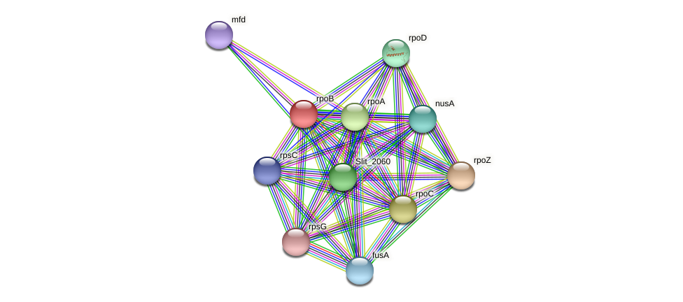 rpoB protein (Sideroxydans lithotrophicus) - STRING interaction network