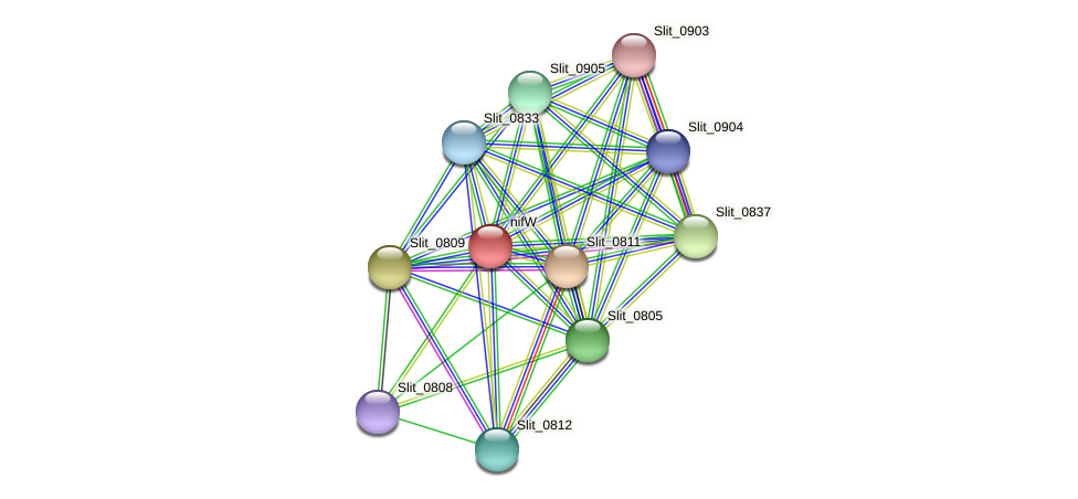 nifW protein (Sideroxydans lithotrophicus) - STRING interaction network