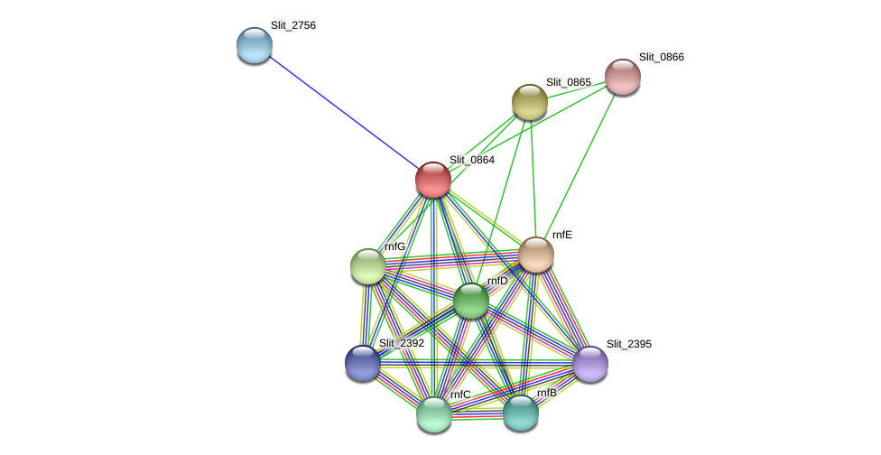 Slit_0864 protein (Sideroxydans lithotrophicus) - STRING interaction network