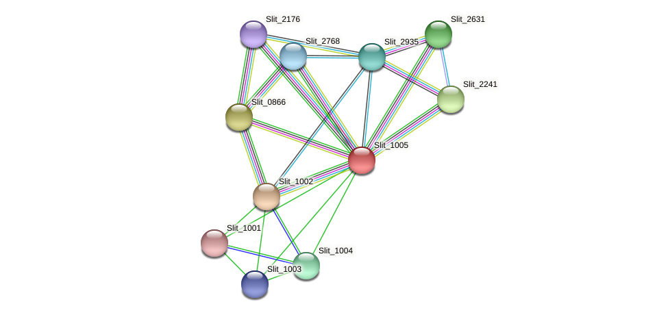 Slit_1005 protein (Sideroxydans lithotrophicus) - STRING interaction network