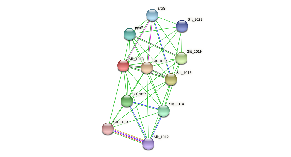 Slit_1018 protein (Sideroxydans lithotrophicus) - STRING interaction network