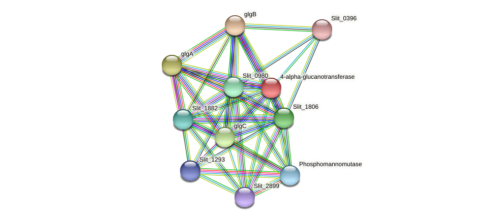 Slit_1037 protein (Sideroxydans lithotrophicus) - STRING interaction network