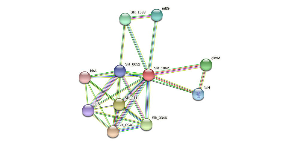 Slit_1062 protein (Sideroxydans lithotrophicus) - STRING interaction network