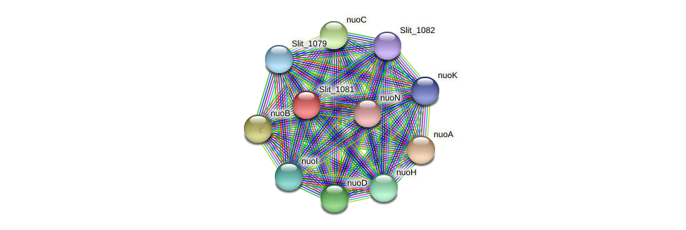 Slit_1081 protein (Sideroxydans lithotrophicus) - STRING interaction network