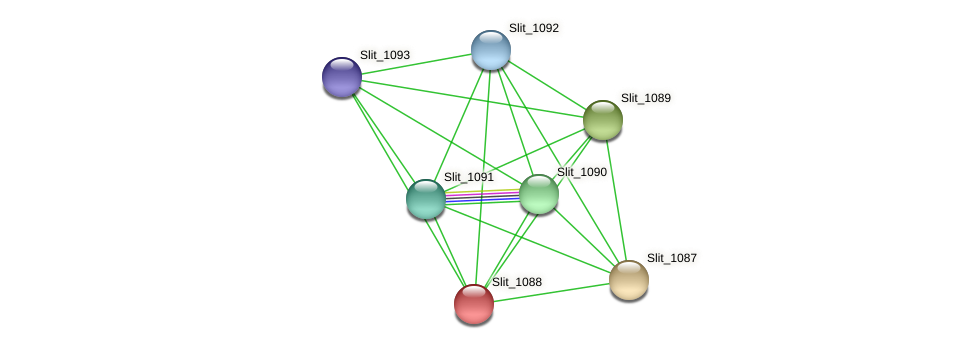 Slit_1088 protein (Sideroxydans lithotrophicus) - STRING interaction network