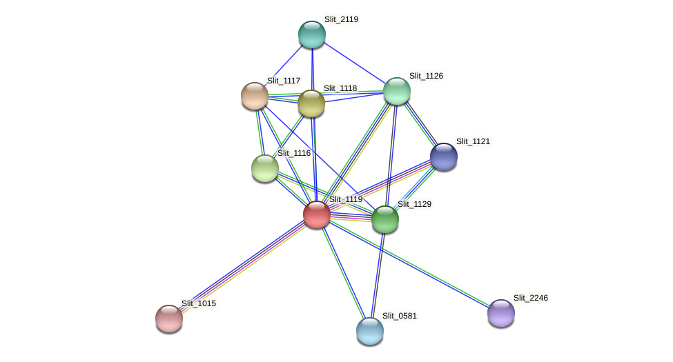 Slit_1119 protein (Sideroxydans lithotrophicus) - STRING interaction network