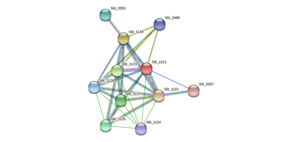 Slit_1121 protein (Sideroxydans lithotrophicus) - STRING interaction network