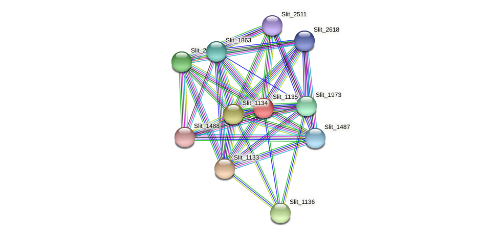 Slit_1135 protein (Sideroxydans lithotrophicus) - STRING interaction network