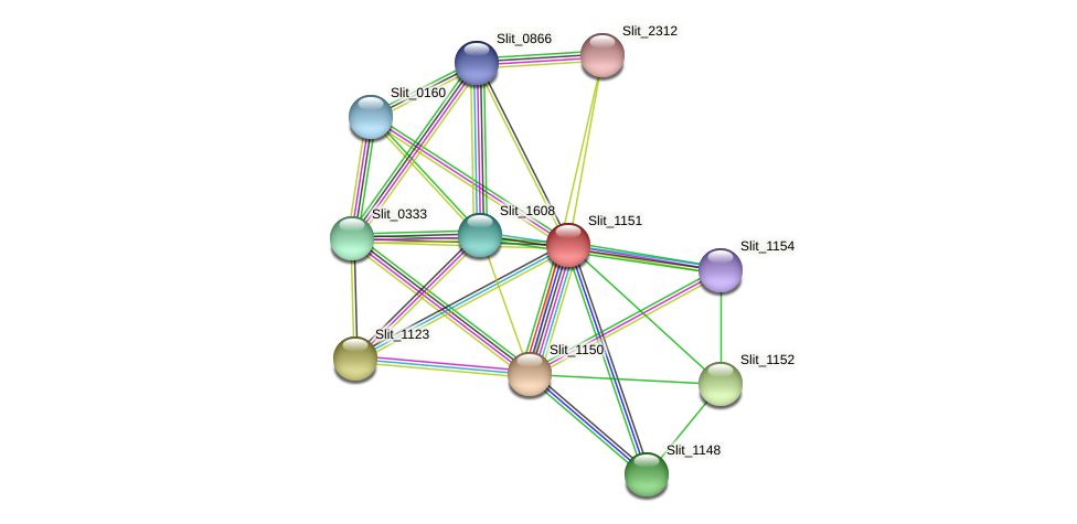 Slit_1151 protein (Sideroxydans lithotrophicus) - STRING interaction network