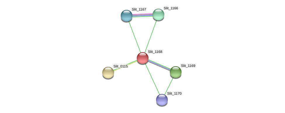 Slit_1168 protein (Sideroxydans lithotrophicus) - STRING interaction network