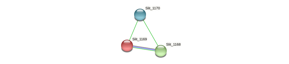 Slit_1169 protein (Sideroxydans lithotrophicus) - STRING interaction network