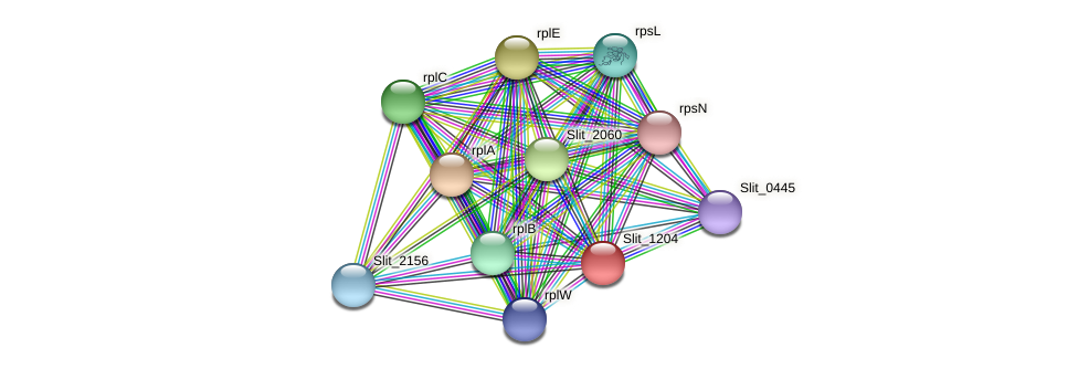 Slit_1204 protein (Sideroxydans lithotrophicus) - STRING interaction network
