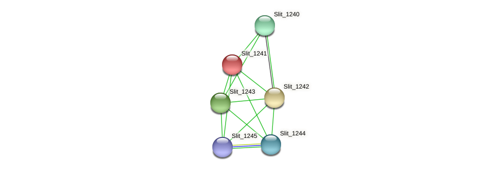 Slit_1241 protein (Sideroxydans lithotrophicus) - STRING interaction network