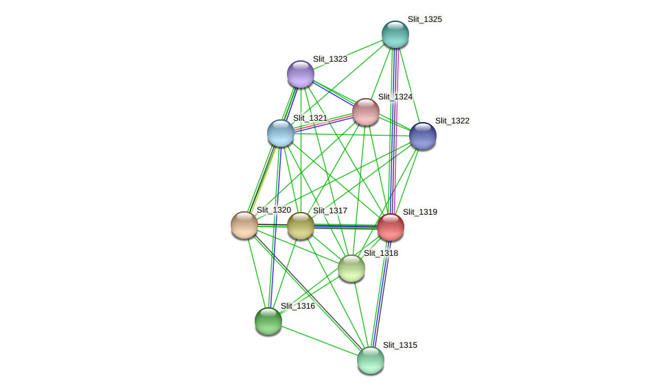 Slit_1319 protein (Sideroxydans lithotrophicus) - STRING interaction network