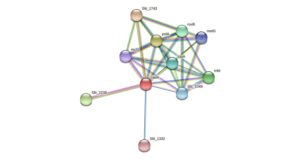 Slit_1331 protein (Sideroxydans lithotrophicus) - STRING interaction network
