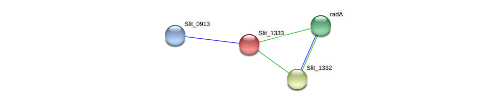 Slit_1333 protein (Sideroxydans lithotrophicus) - STRING interaction network