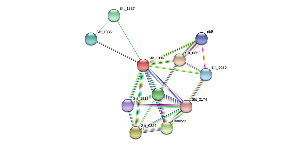 Slit_1336 protein (Sideroxydans lithotrophicus) - STRING interaction network