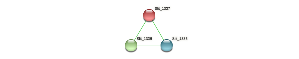 Slit_1337 protein (Sideroxydans lithotrophicus) - STRING interaction network