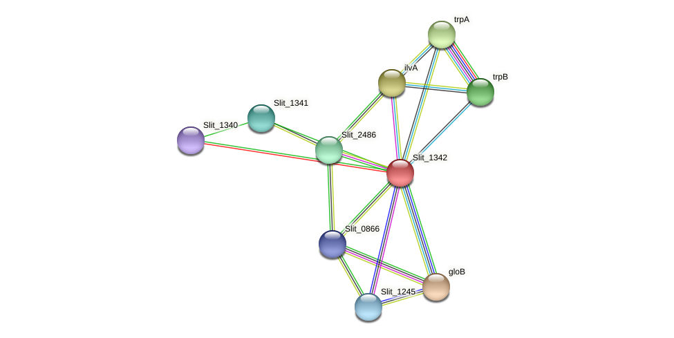 Slit_1342 protein (Sideroxydans lithotrophicus) - STRING interaction network
