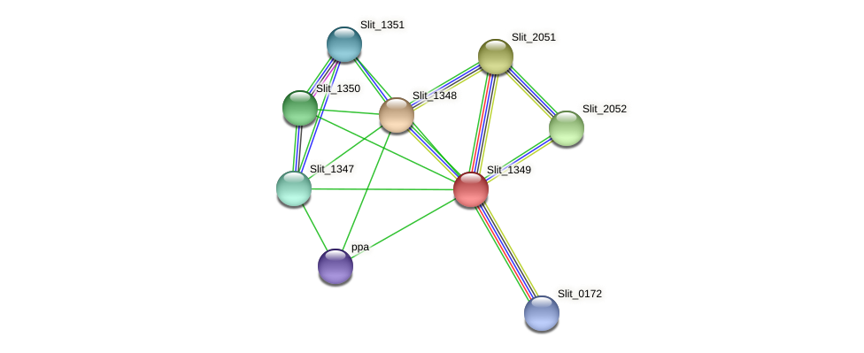 Slit_1349 protein (Sideroxydans lithotrophicus) - STRING interaction network