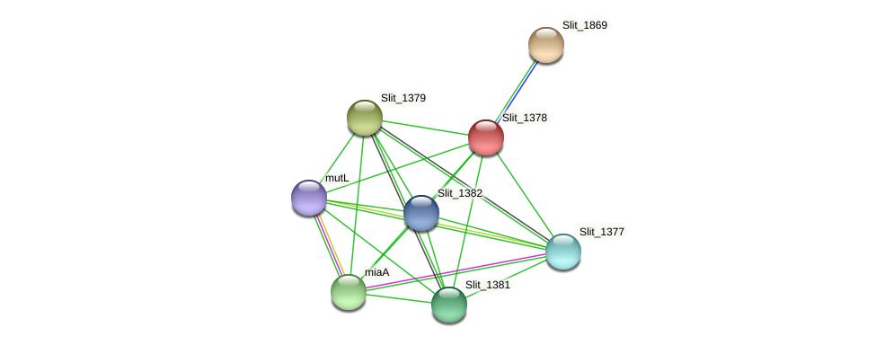 Slit_1378 protein (Sideroxydans lithotrophicus) - STRING interaction network