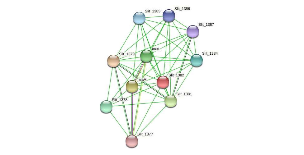 Slit_1382 protein (Sideroxydans lithotrophicus) - STRING interaction network