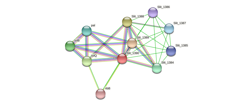 Slit_1390 protein (Sideroxydans lithotrophicus) - STRING interaction network
