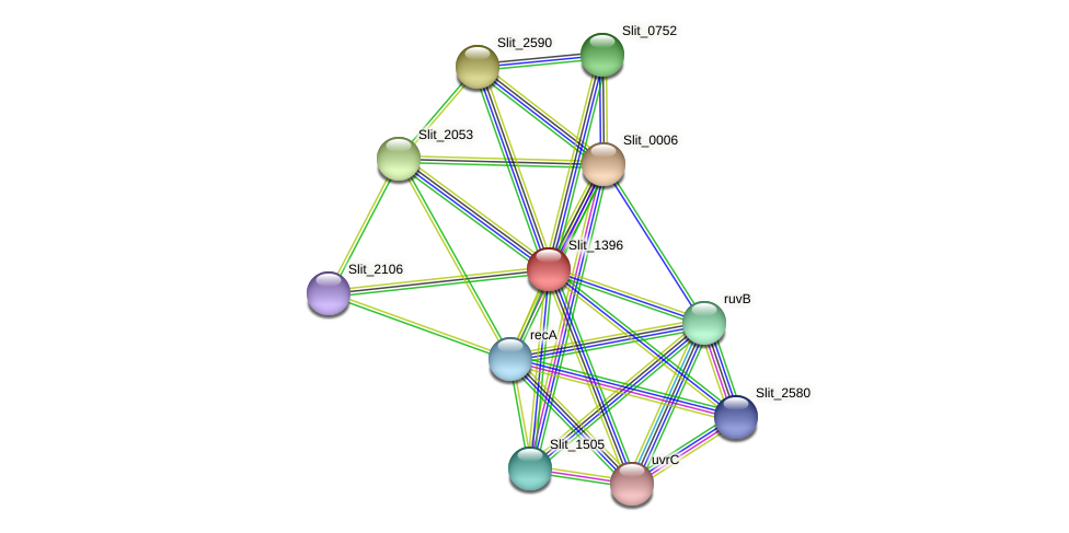 Slit_1396 protein (Sideroxydans lithotrophicus) - STRING interaction network