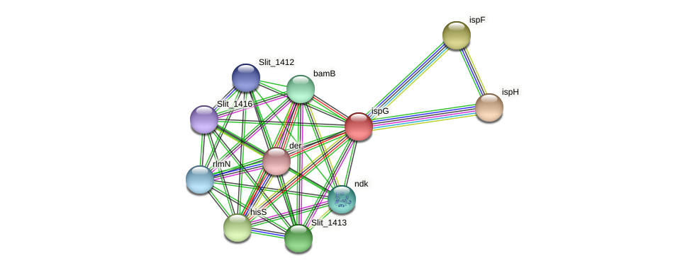 ispG protein (Sideroxydans lithotrophicus) - STRING interaction network