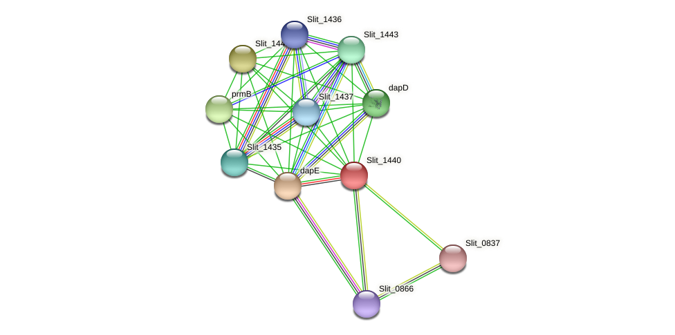 Slit_1440 protein (Sideroxydans lithotrophicus) - STRING interaction network