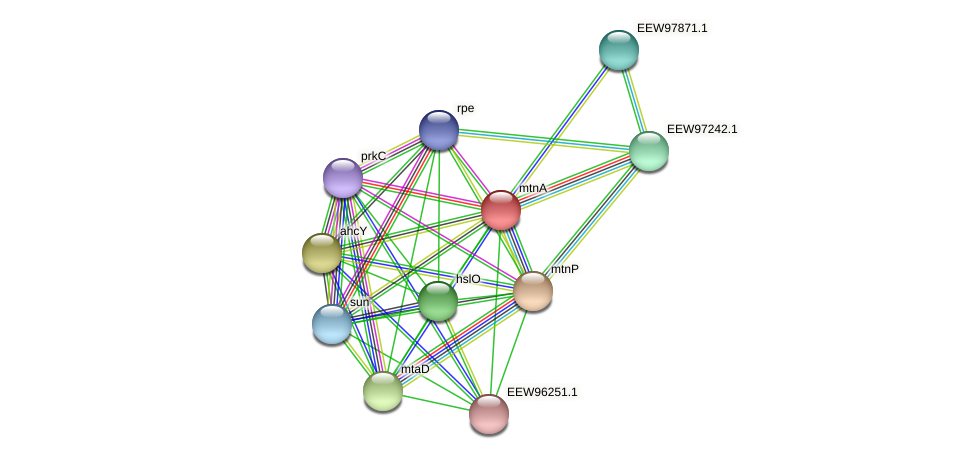 mtnA protein (Dialister invisus) - STRING interaction network