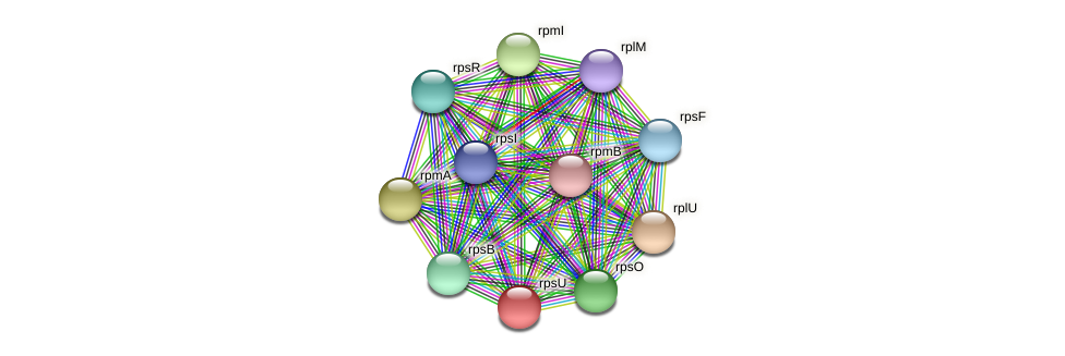 rpsU protein (Dialister invisus) - STRING interaction network