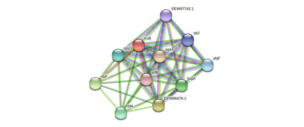 truB protein (Dialister invisus) - STRING interaction network
