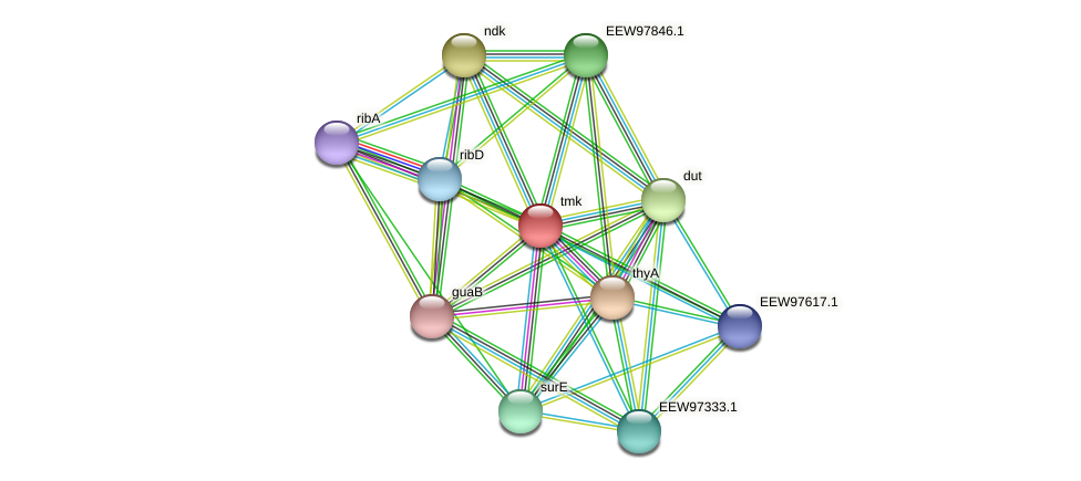 tmk protein (Dialister invisus) - STRING interaction network