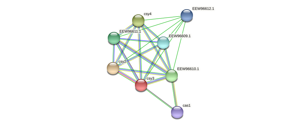 csy3 protein (Dialister invisus) - STRING interaction network