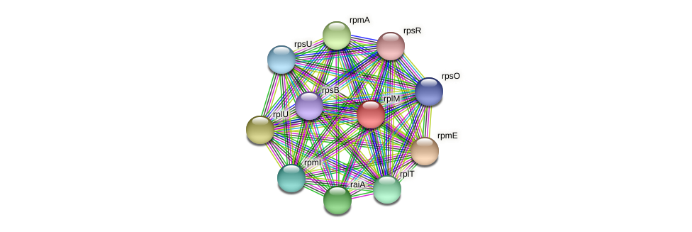 rplM protein (Dialister invisus) - STRING interaction network